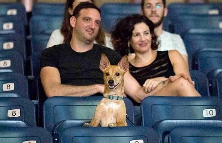 Ir al cine con tu mascota. En Israel ya es posible 1