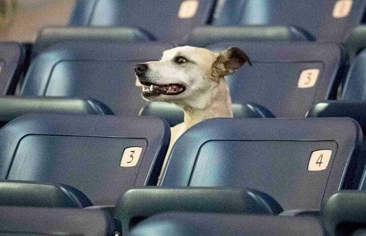 Ir al cine con tu mascota. En Israel ya es posible 2