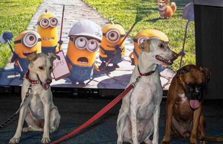 Ir al cine con tu mascota. En Israel ya es posible 5