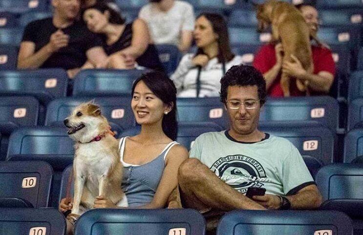 Ir al cine con tu mascota. En Israel ya es posible 6