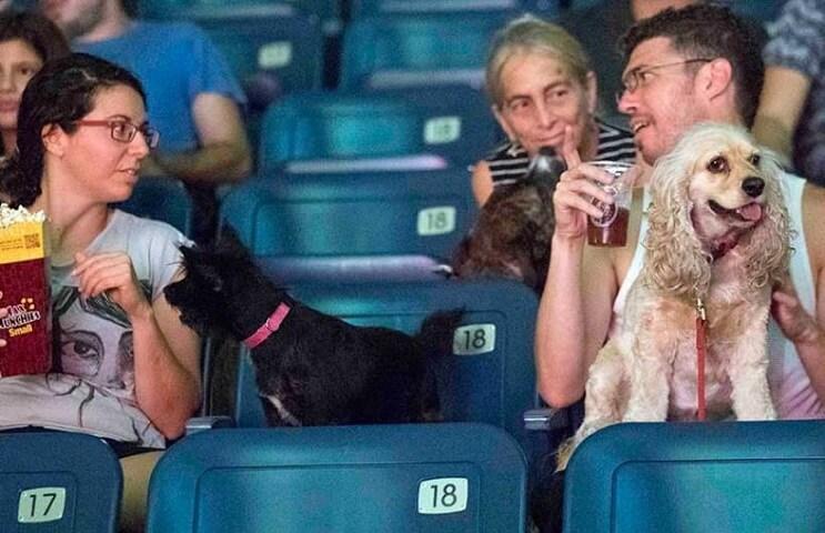 Ir al cine con tu mascota. En Israel ya es posible 7
