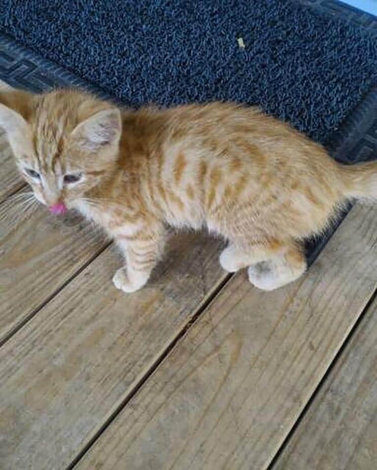 La alimentaron por días y esta gata apareció con una adorable sorpresa 3