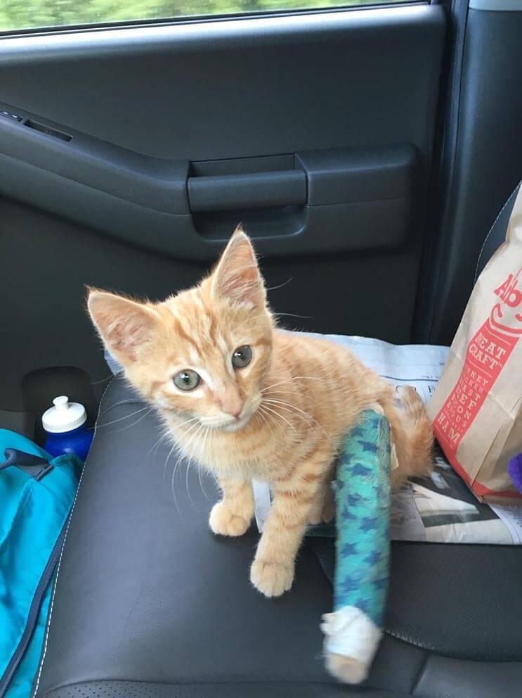 La alimentaron por días y esta gata apareció con una adorable sorpresa 4