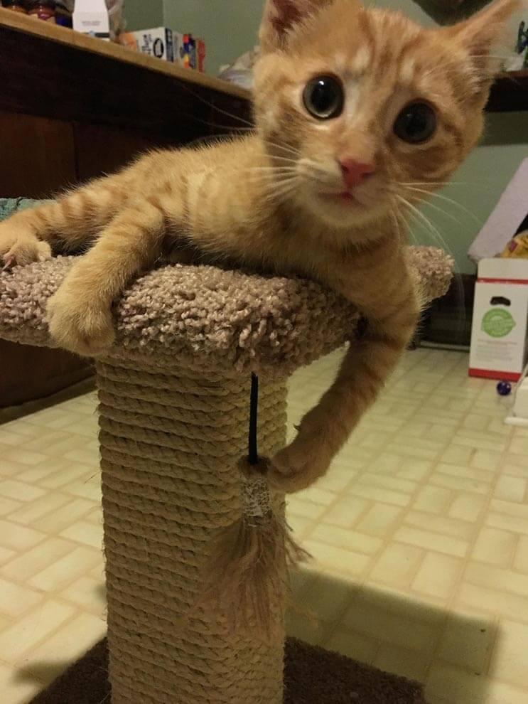 La alimentaron por días y esta gata apareció con una adorable sorpresa 6