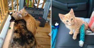 Esta gata sin hogar recurrió a los humanos que la alimentaban para ayudar a su cría