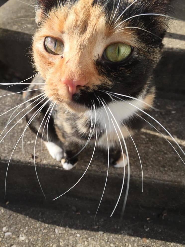 La alimentaron por días y esta gata apareció con una adorable sorpresa