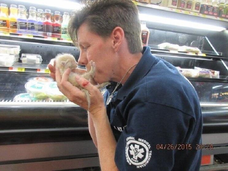 La loca historia de dos gatos bebés encontrados bajo una congeladora en un supermercado 03