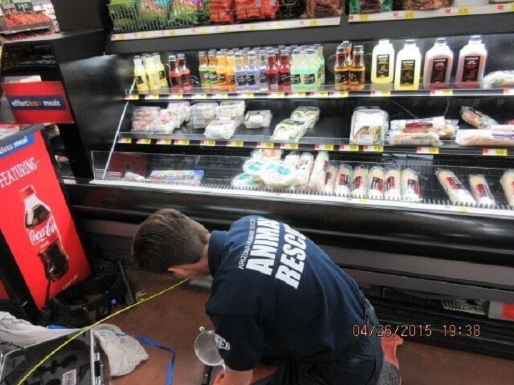 La loca historia de dos gatos bebés encontrados bajo una congeladora en un supermercado 07
