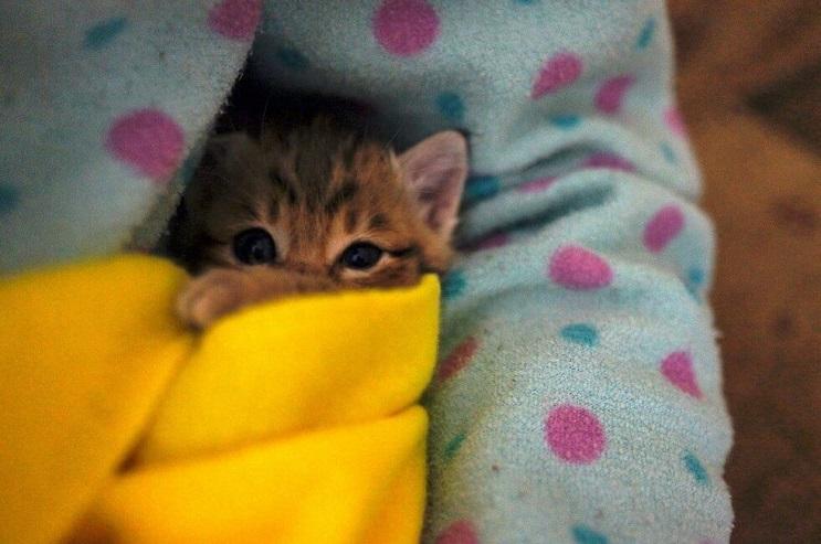 La reacción de esta gata al canto de su dueña te dejará impresionado 01