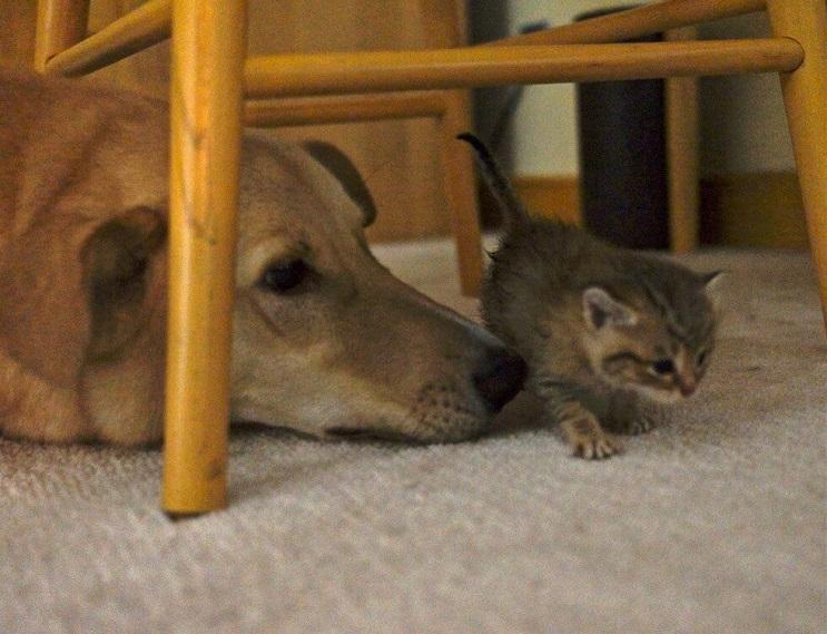 La reacción de esta gata al canto de su dueña te dejará impresionado 05