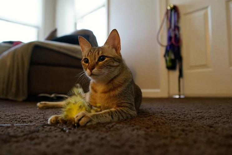 La reacción de esta gata al canto de su dueña te dejará impresionado 07