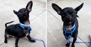 Esta sesión de fotos para que este perro sea adoptado no salió como lo planearon