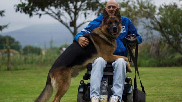 Lobo, un pastor alemán, y su dueño tienen un emocionante reencuentro en un hospital 1