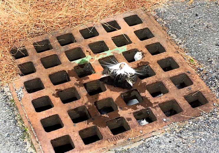Los boberos realizaron un singular rescate