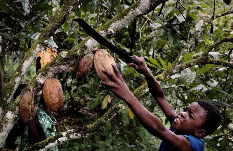 Marcas fabricantes de chocolate que podrían estar produciendo en base a trabajo infantil 01