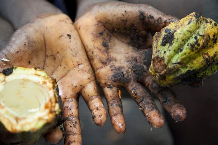 Marcas fabricantes de chocolate que podrían estar produciendo en base a trabajo infantil 02