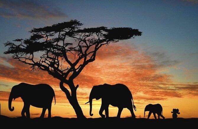 Niño pierde su elefante de peluche y lo photoshoppers deciden despedirlo con un viaje alrededor del mundo 06