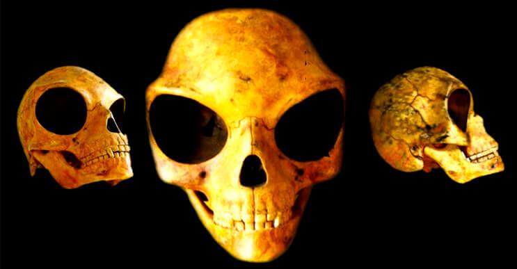 Todavía persiste el misterio que envuelve el cráneo \
