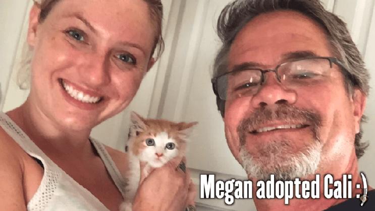 Rescatar a esta gata fue casi una misión imposible pero no la abandonaron a su suerte 7