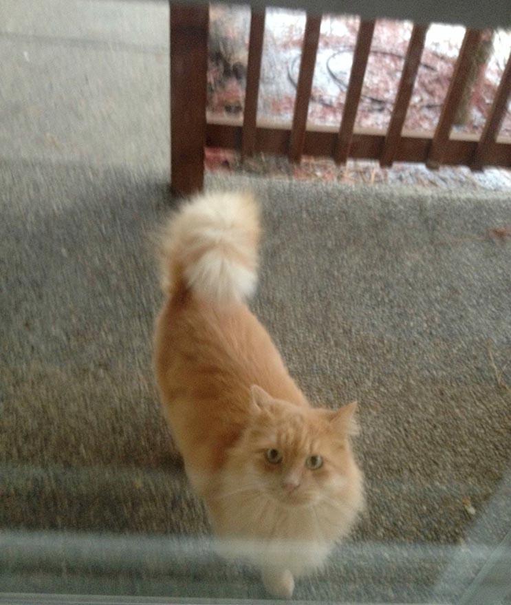 Todas las mañanas este gato espera el bus escolar con hermano humano 2