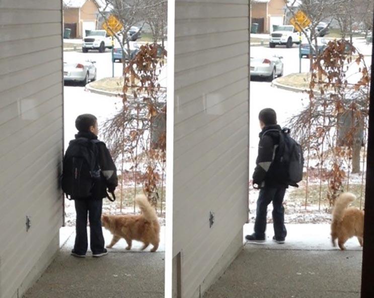 Todas las mañanas este gato espera el bus escolar con hermano humano 3