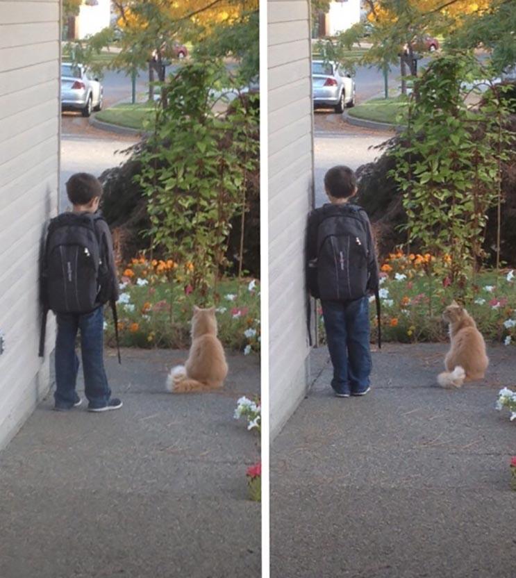Todas las mañanas este gato espera el bus escolar con hermano humano