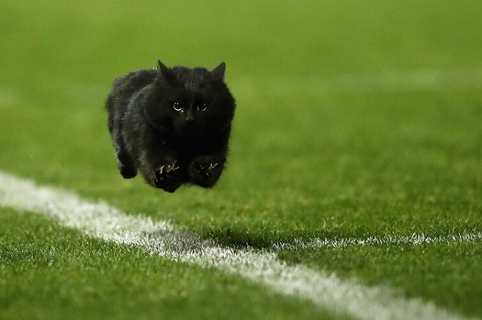 Un gato interrumpe en un partido de rugby y desata una nueva batalla de Photoshop 001