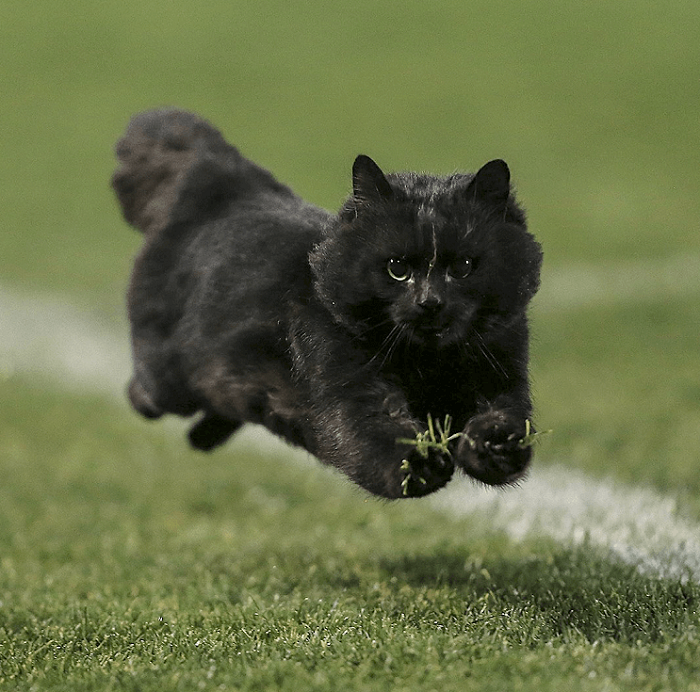 Un gato interrumpe en un partido de rugby y desata una nueva batalla de Photoshop 002
