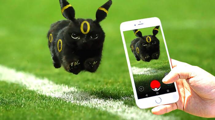 Un gato interrumpe en un partido de rugby y desata una nueva batalla de Photoshop 03