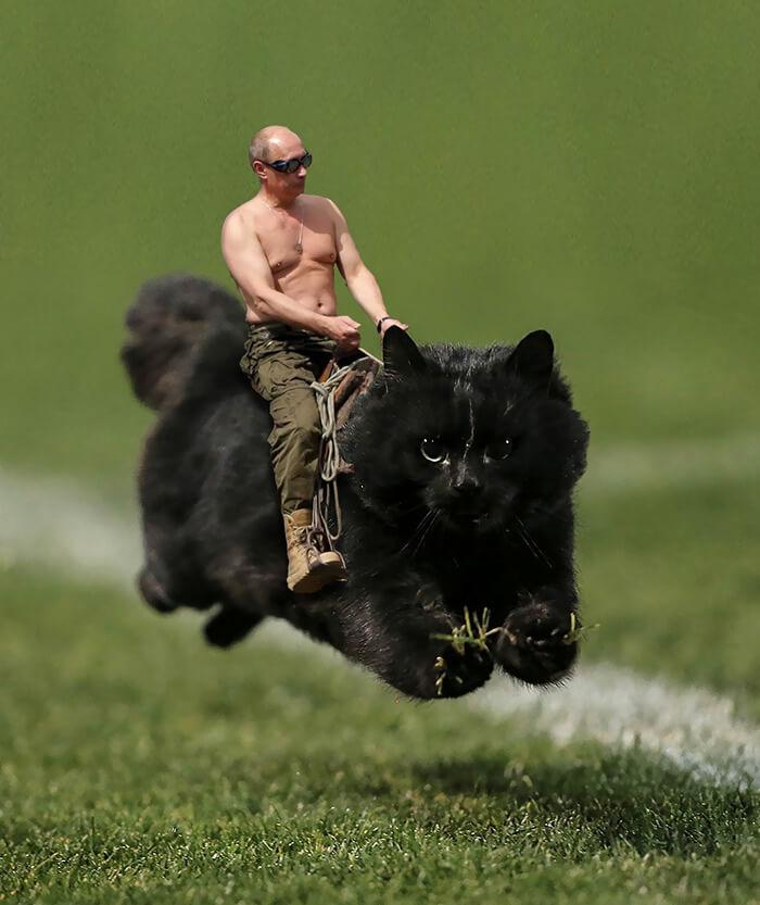 Un gato interrumpe en un partido de rugby y desata una nueva batalla de Photoshop 04