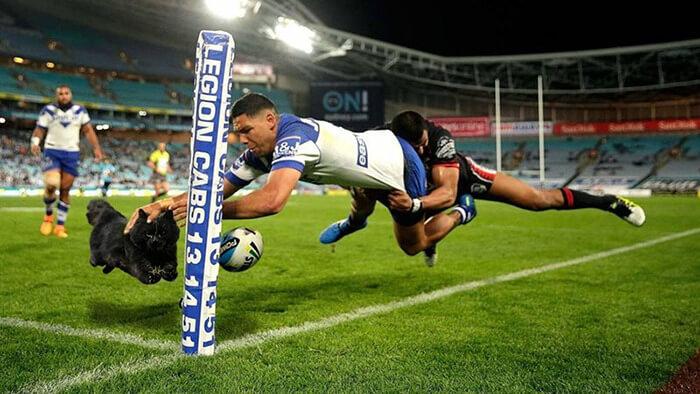Un gato interrumpe en un partido de rugby y desata una nueva batalla de Photoshop 10