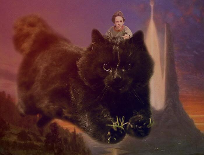 Un gato interrumpe en un partido de rugby y desata una nueva batalla de Photoshop 11