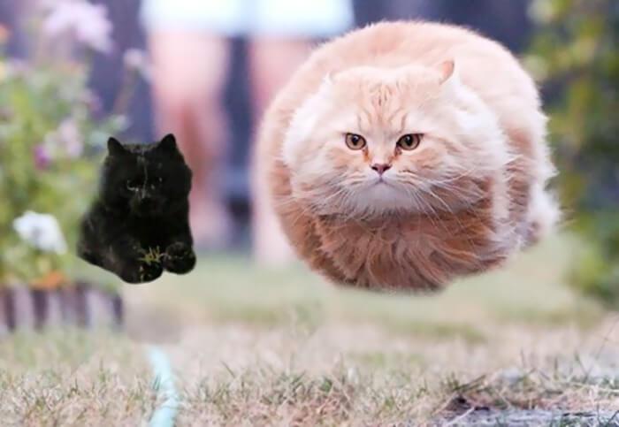 Un gato interrumpe en un partido de rugby y desata una nueva batalla de Photoshop 13