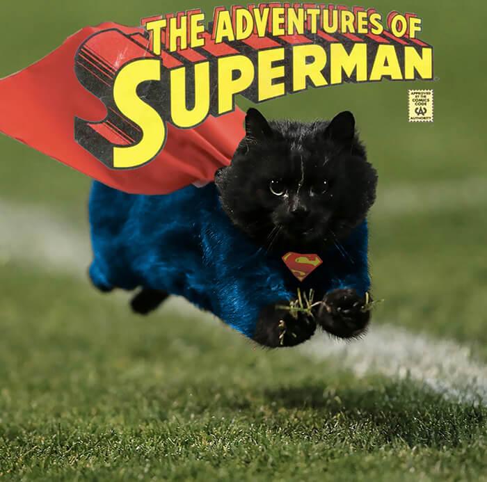 Un gato interrumpe en un partido de rugby y desata una nueva batalla de Photoshop 15