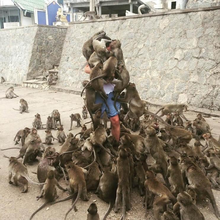 Un hombre quiso alimentar a los monos y le pasó esto. Por si fuera poco, el Photoshop también lo agarró 01