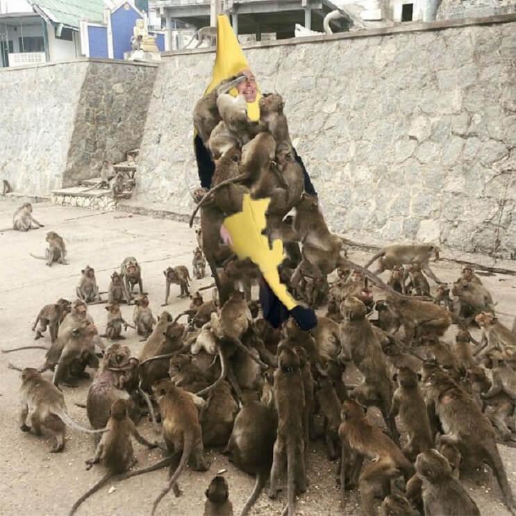 Un hombre quiso alimentar a los monos y le pasó esto. Por si fuera poco, el Photoshop también lo agarró 05