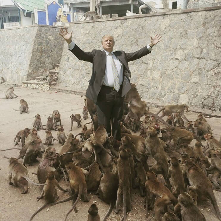 Un hombre quiso alimentar a los monos y le pasó esto. Por si fuera poco, el Photoshop también lo agarró 07
