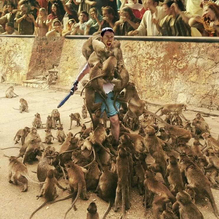 Un hombre quiso alimentar a los monos y le pasó esto. Por si fuera poco, el Photoshop también lo agarró 09
