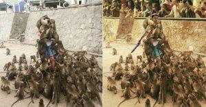 Un hombre quiso alimentar a los monos y le pasó esto. Por si fuera poco, el Photoshop también lo agarró