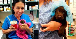 Veterinario salva a perrito de la eutanasia y lo adopta