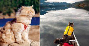 Campamento para gatos