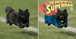 Un gato interrumpe en un partido de rugby y desata una nueva batalla de Photoshop