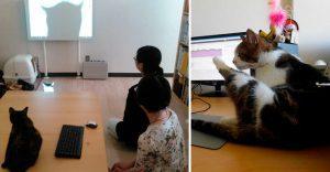 Compañía japonesa encuentra inusual forma de promover la productividad en sus empleados
