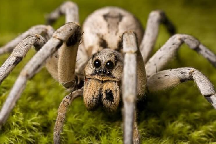 5-mitos-sobre-las-arañas