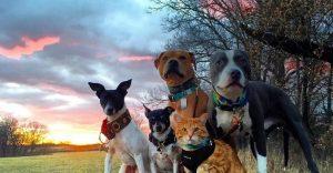 Conoce a esta adorable familia de cuatro perros, dos patos y un gato