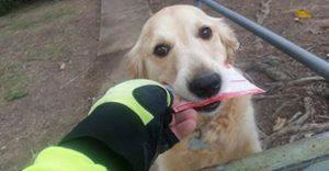 A este perro le encanta recibir correos y por ello el cartero decidió escribirle a diario