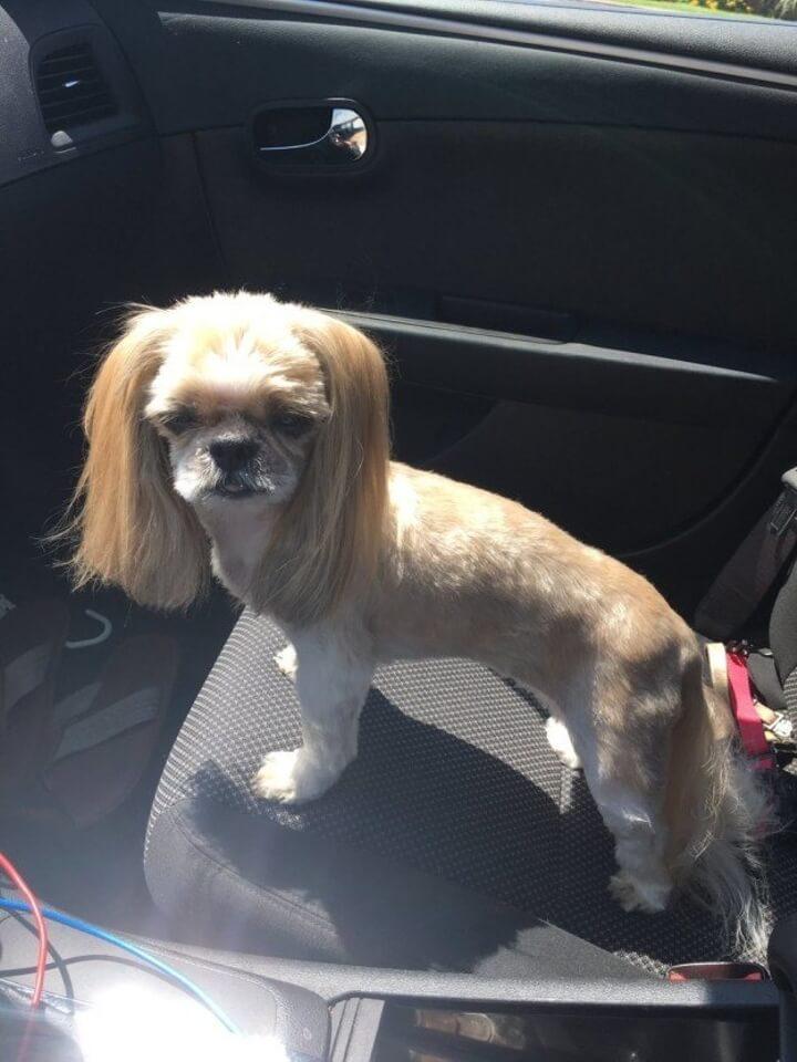 El corte de pelo de este perro ha puesto a reír a todo Internet 03