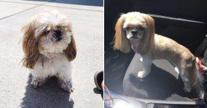 El corte de pelo de este perro ha puesto a reír a todo Internet