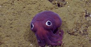 Esta criatura parece que fue hecha para una película infantil pero es de verdad