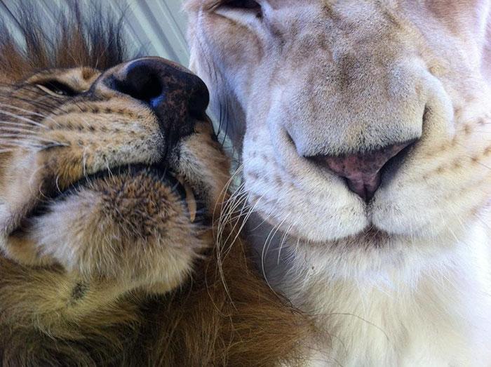 Esta leona nos enseña que jamás hay que perder las esperanzas para vivir y amar 6